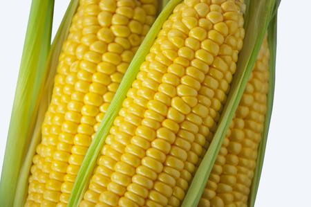 Yellow sweet corns close up