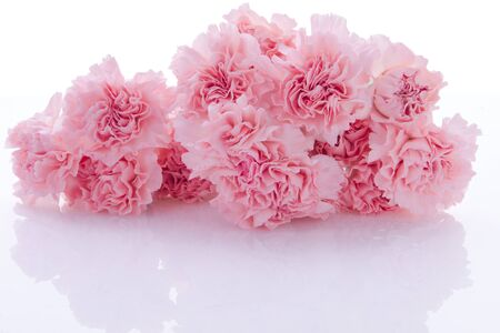 Happy Mother's Day, pink carnations in full bloom