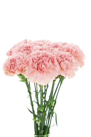 Happy Mother's Day,  pink carnations in full bloom. Stock Photo