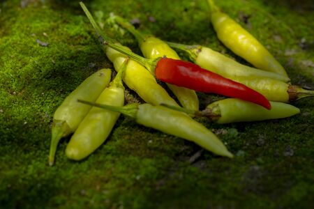 Xiaomi spicy, also known as Xiaomi pepper, is produced in Yunnan, China, and is the main material for making pickled pepper. 版權商用圖片