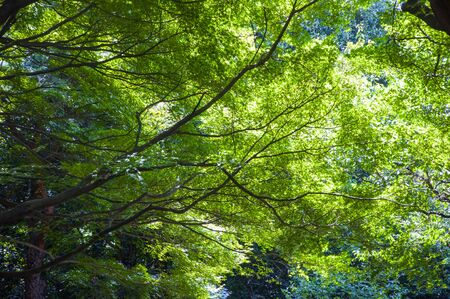 Tokyo, Japan, Ueno Animal Park, summer, quiet, cool plant forest