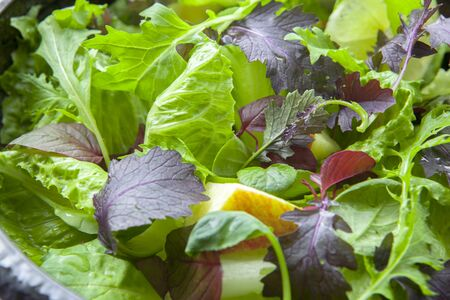 Vegetarian favorite, continental breakfast lettuce salad with diverse vegetables