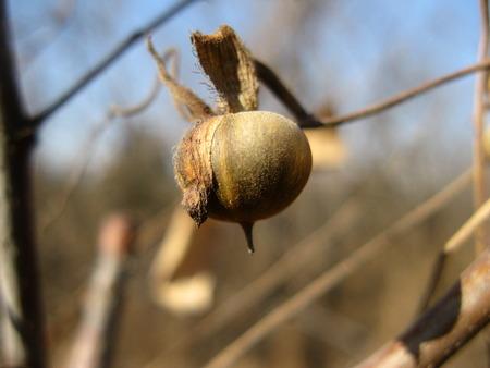 sustenance: Seeds of Hope Stock Photo