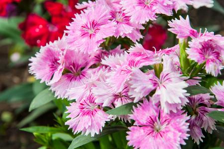 Pink bloom flowers in the garden
