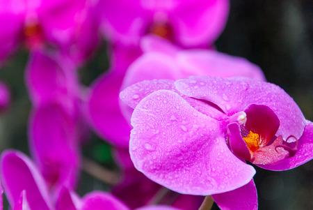 Pink Orchids Banco de Imagens