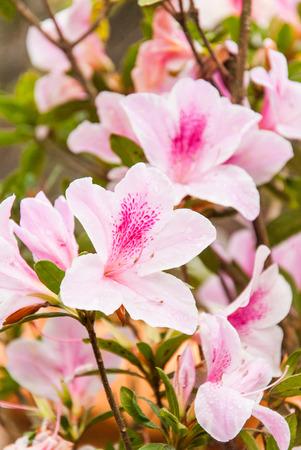 Pink bloom in the garden