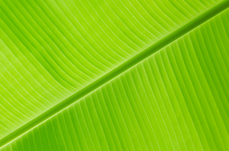 geen: Geen banana leaf  Stock Photo