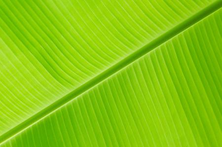 Geen banana leaf  Standard-Bild