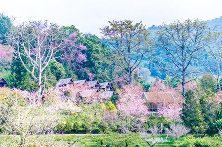 thai resort on doi angkhang, chiang mai  thailand