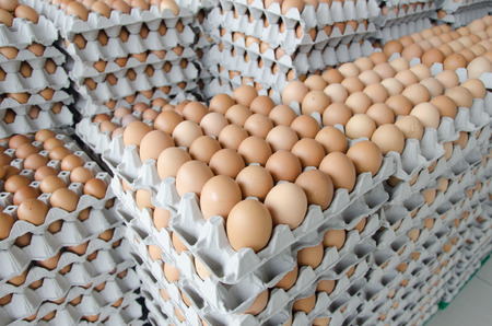 Eggs in the package of gray paper Standard-Bild