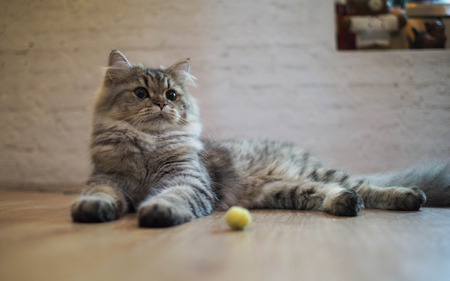 attentiveness: Cat looking for something interesting Stock Photo