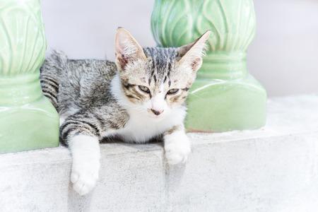 crouches: Kitten crouches on balcony edge