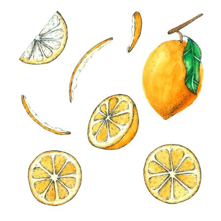 Lemon watercolor collection Hand drawn painting