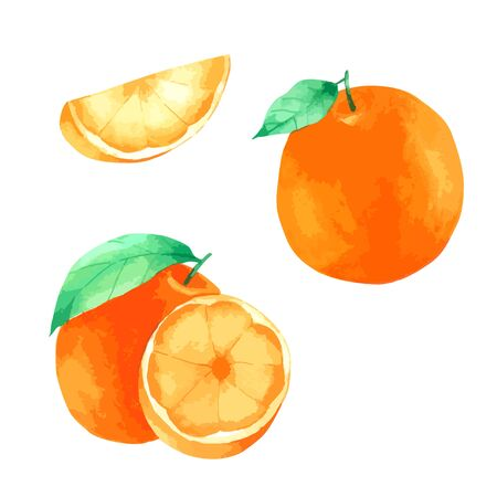 Orange fruit watercolour paint on white background