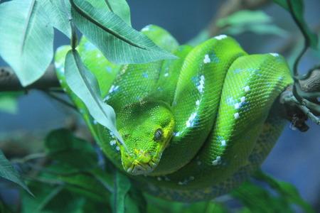 endangering: snake