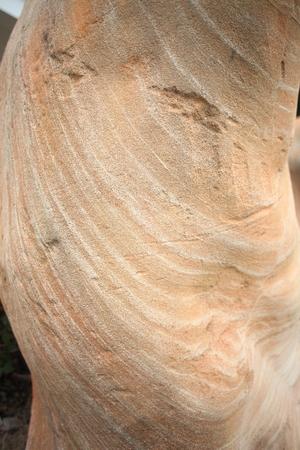 petrified fossil: petrified wood,korat fossil museum