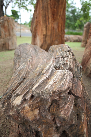 petrified wood,korat fossil museum
