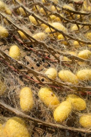 transmogrify: Silkworm cocoons