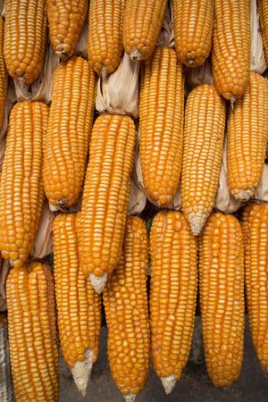 elote: Mazorca de ma�z y de semillas