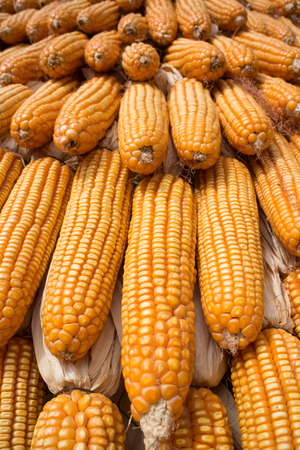 corn on the cob: Corn Cob and Seed