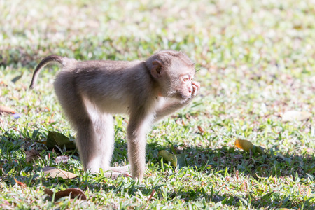 Long-tailed Macaque Monkey in the Khaoyai National Park Thailand photo