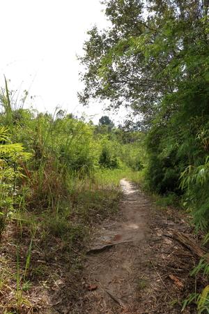 phukradueng: Walk in the phukradueng national park Stock Photo