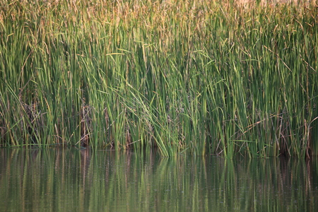 swamp: Swamp with lush vegetation Stock Photo