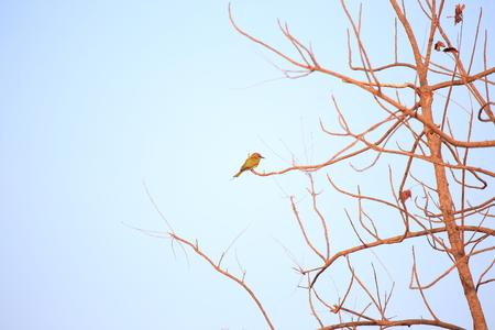 perch dried: small bird on dry tree