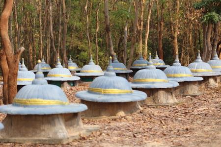 partisan: Elephant Graveyard in thai land