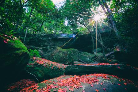 kradueng: Phu Kradueng national park ,nature waterfall and tree green beautiful ,Thailand Stock Photo