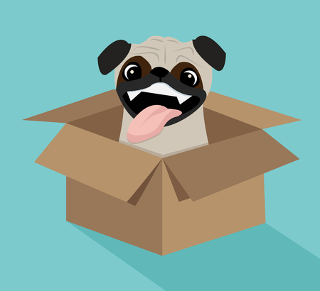 Cute dog in the box