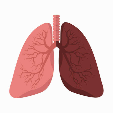 lungs vector with Comparing Lung vector