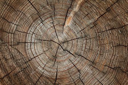 drewno: Drewno