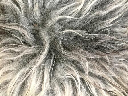 Sheep fur background Stock Photo
