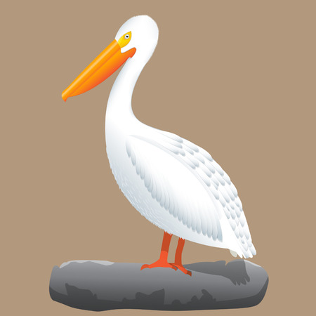 American white pelican standing on the rock, isolated illusration Ilustração