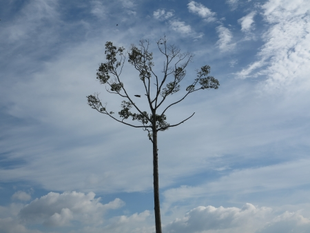 tunable: Lonely tree in a field under a summer blue sky