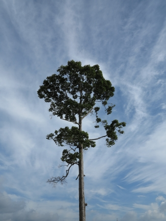 tunable: one tree and perfect beautiful blue sky
