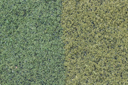 carpeting: Artificial green grass background