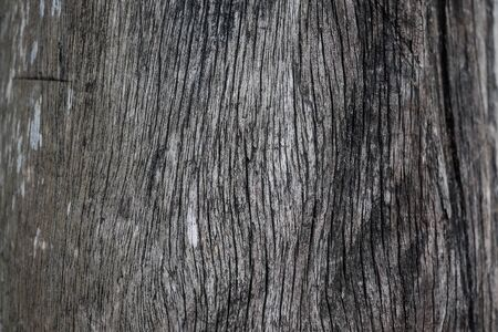Brown wood texture background coming from natural tree, Old wooden rustic style 写真素材