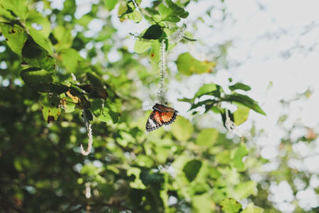 Colorful butterfly hanging on tree and flower during the day