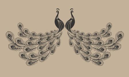 pluma de pavo real: Pavo real abstracto de color marr�n Vectores