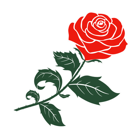 red rose design,vector  illustration