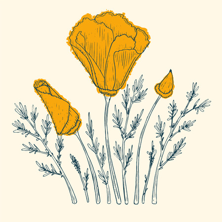 poppy flowers: Orange poppy flower