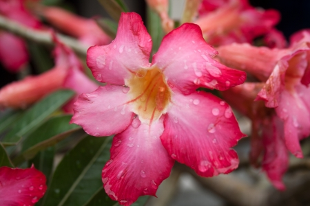 the flower after rain fall