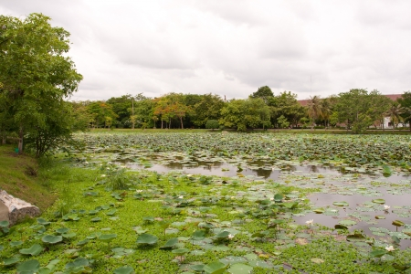 Swamp_and_water_weed_in_gardent Stock Photo