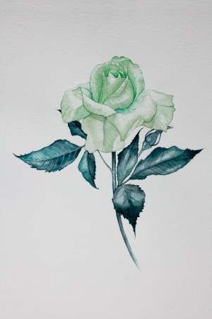 pink rose: Isolated water color pink rose it