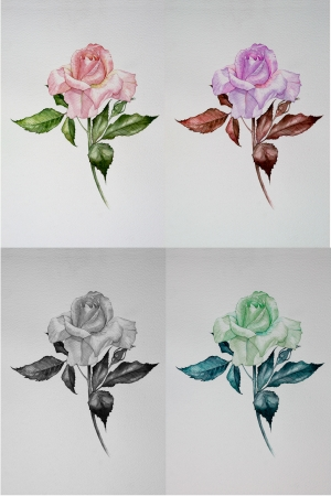 Set of rose paint by water color