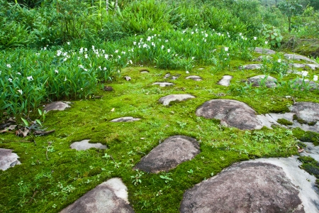 White flower ans moss on moutain in northern of thailand photo
