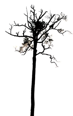 silhouette shadow of dry tree photo