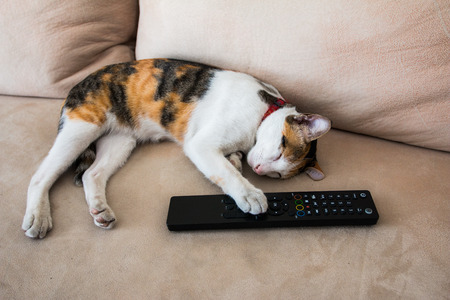 Sleeping cute cat holding remote in hand